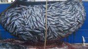 Garantiza Sagarpa Abasto de Productos del Mar en Cuaresma