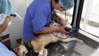 Esterilización Permanente y Gratuita de UAEM a Perros y Gatos
