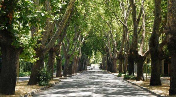 Gobierno de Guadalajara Anuncia Primer Acercamiento a un Censo Real de Arbolado