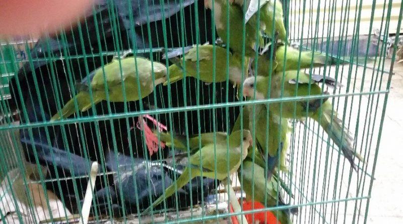 Rescata PGR Decenas de Especies Protegidas