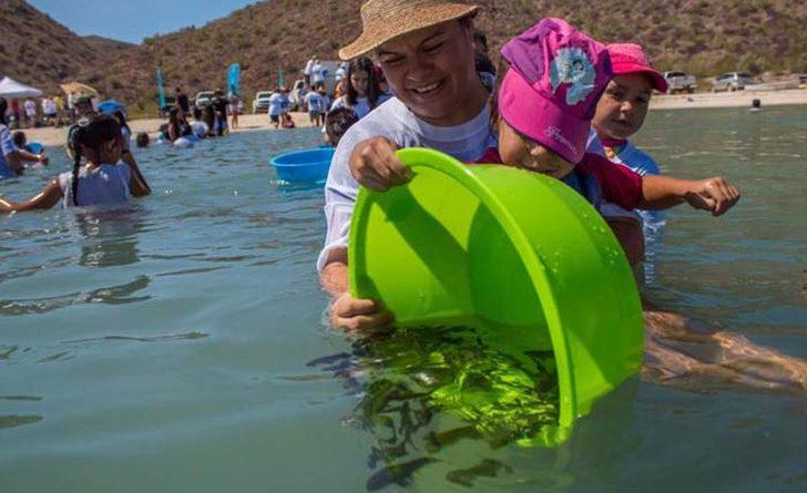 Cuarto Repoblamiento de la Totoaba en Baja California Sur