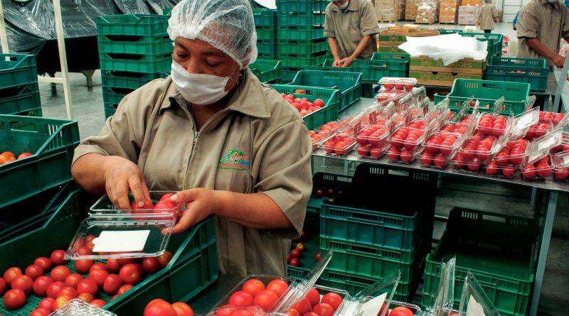 Inicia Senasica Entrega del Certificado Fitosanitario Internacional para Exportación de Vegetales