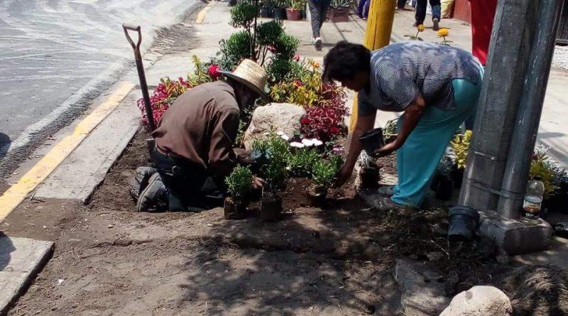 Embellecen Antorchistas el Predio Rojo Gómez con Hermoso y Colorido Jardín