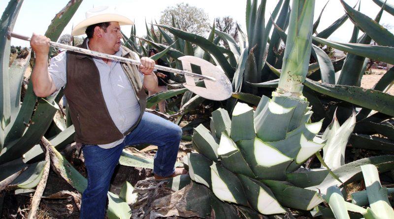 Reunirán Sefoa y Sagarpa a más de 500 Productores en Encuentro Estatal Agroalimentario