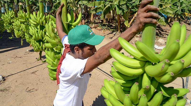 Inicia operaciones Consejería Agropecuaria de México en Singapur