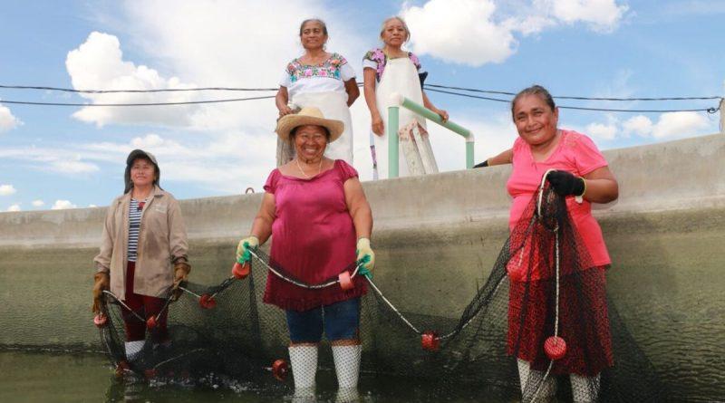 Incentivos a la Acuacultura Generan Incrementos Tangibles en la Producción: CONAPESCA