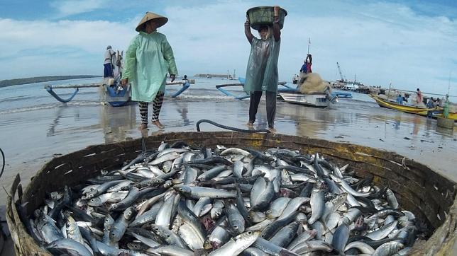 Prepara Sader Propuesta Legislativa para Fortalecer Sector Pesquero y Acuícola Nacional