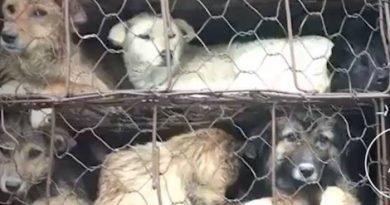 Ocupa México el Tercer Lugar en Maltrato Animal; Plantean Realizar Campañas de Concientización