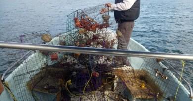 Logra Conapesca Retención  Precautoria de más de 107 mil Kilogramos de Productos Pesqueros y Acuícolas en Septiembre