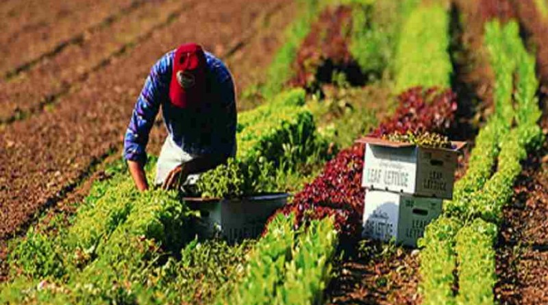 Coordinan Acciones Agricultura, productores y sector privado para garantizar suministro de alimentos en etapa de contingencia sanitaria