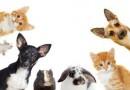 Cuidados de tu Mascota Durante Contingencia de Aislamiento por COVID19