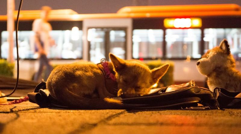 China Prohíbe Consumo de Perros, Gatos, Serpientes y Lagartos